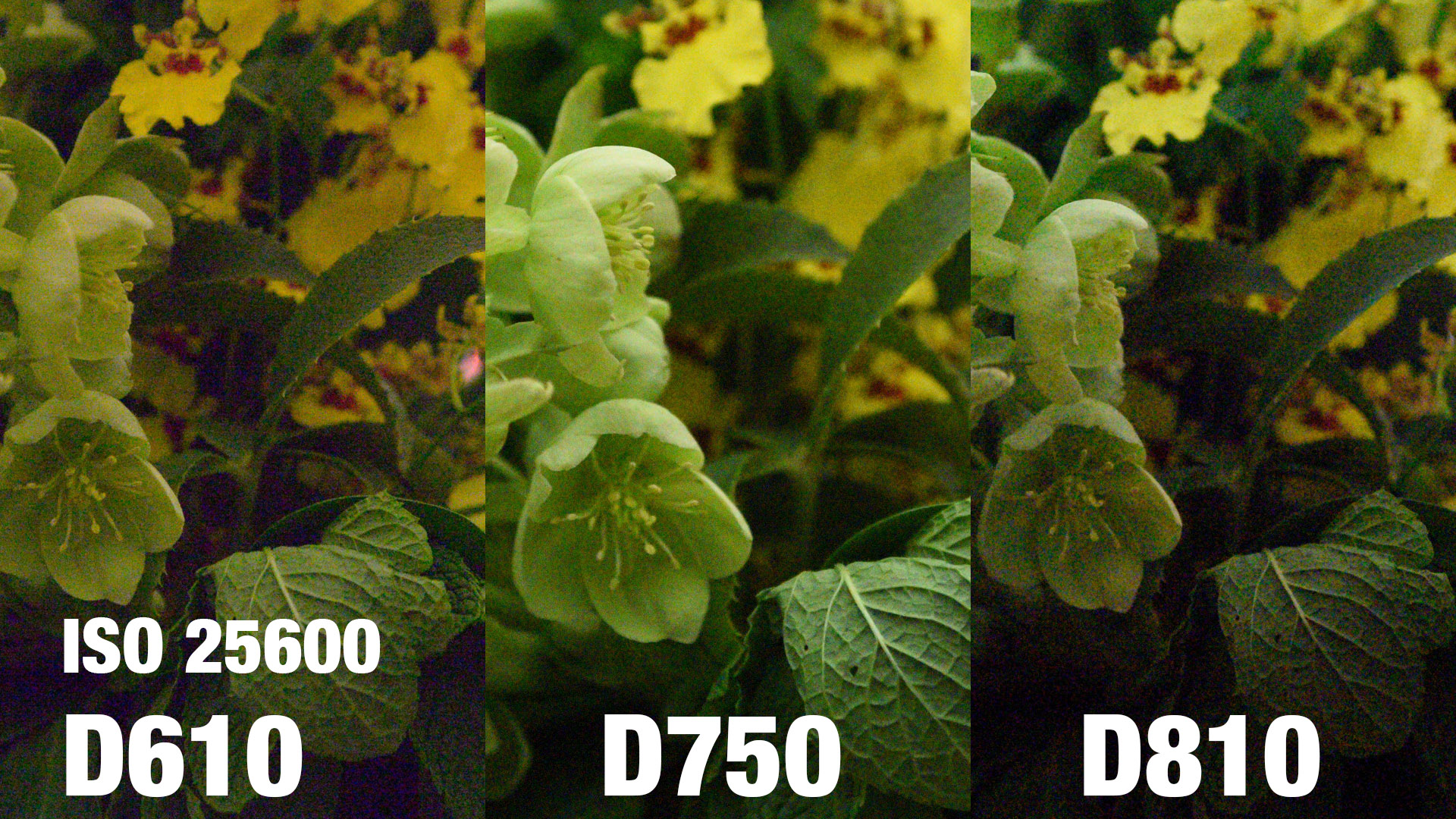 High ISO comparison between the D610, D750 and D810